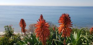 Beautiful Ocean View with Beautiful Exotic Plants