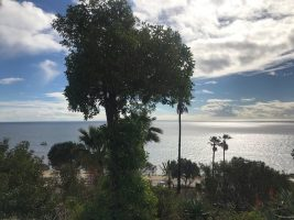 Beautiful Tall Trees over watching the ocean View as far as the eye can see