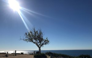 Sunshine Casting with a Clear sky over a single Tree resting in the center of a sandy ocean shore